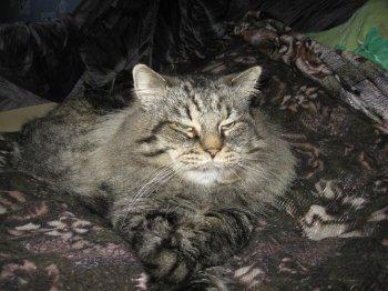 Вы попали на сайт о коте Neo Marcell